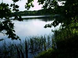 Un étang en Sologne (2)
