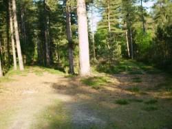 La forêt en Sologne